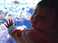 Isla LOVED the saltwater fish tanks, especially the ones with the clownfish