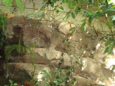 Sleeping sloth!